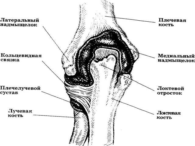 Mida teha kuunarnuki liigeste turse Salvesta haigus jalgsi