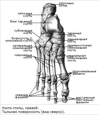 Rosinad liigeste raviks Artriit reieluu