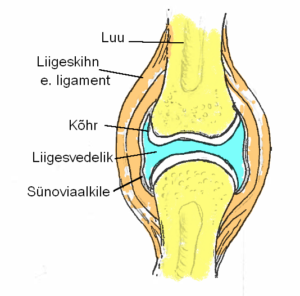 Arthralgia Sustav ravi