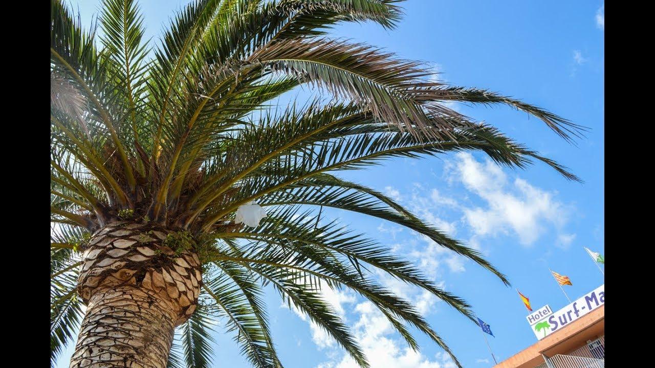 Hoia liigeste palmi kaed