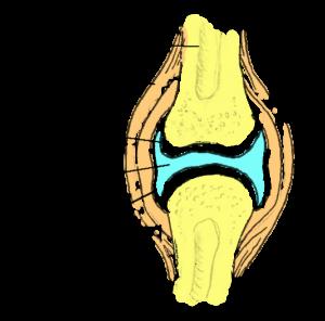 Valu pohjus lihases ja liigestes