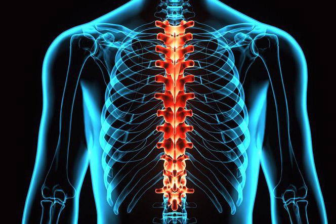 Mazi geelid osteokondroosi ravis