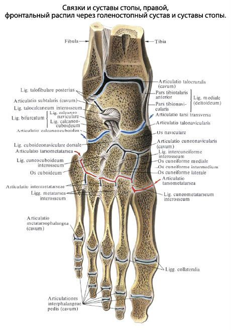 Artriidi kate ennetamine valu sormede liigestes.